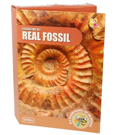 Picture of Excavation Kit - Real Fossils
