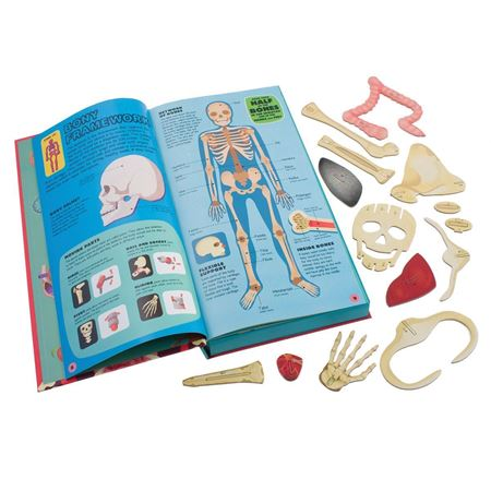 Picture of Build the Human Body (Book & Model)